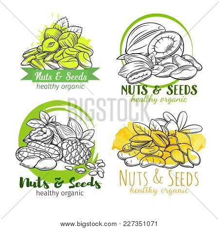 Banners Or Labels With Hand Drawn Nuts And Seeds. Cola Nut, Pumpkin Seed, Peanut And Sunflower Seeds