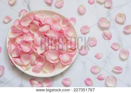 Beautiful Pink Rose Flower Petals. Nature Background