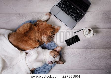 Two Dogs At The Laptop. Coffee Break