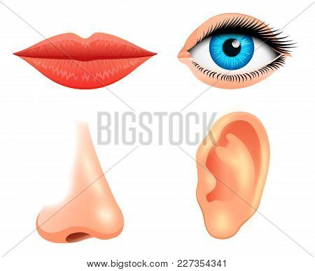 Human Biology, Sensory Organs, Anatomy Illustration. Face Detailed Kiss Or Lips, Nose And Ear, Eye O