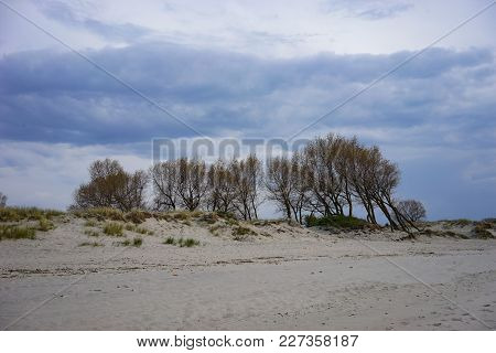 Kaliningrad Region, Russia - May 12, 2016: Sand Dunes On The Shore Of The Baltic Sea.
