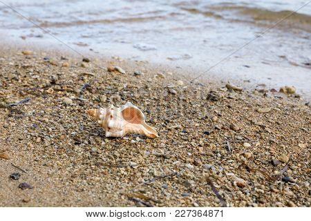 Morning Summer Time Beautiful Seashell On The Beach. Horizontal. Close-up.