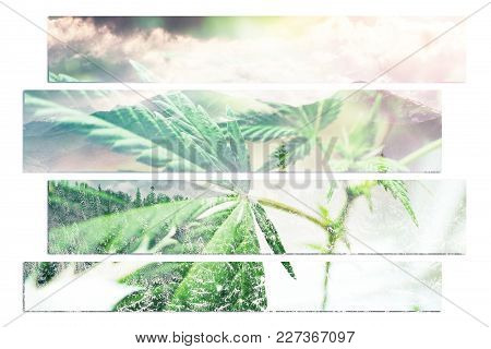Marijuana Art With Winter Background High Quality Stock Photo