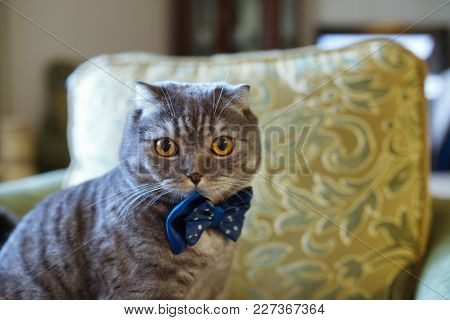Cat In Blue Butterfly On Blurred Background