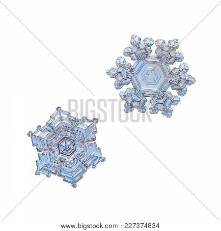Two Snowflakes Isolated On White Background. Macro Photo Of Real Snow Crystals: Stellar Dendrites Wi