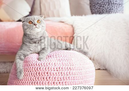 Cute cat lying on ottoman at home