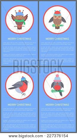 Merry Christmas 60s Congratulation Postcard With Bullfinch And Owl Dressed In Knitted Clothes. Vecto