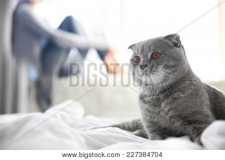 Cute pet cat and blurred woman on background