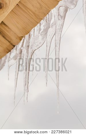Many Beautiful Icicles Melt On The Wooden Roof At The End Of Winter And Water Drops Are Fall Down. S
