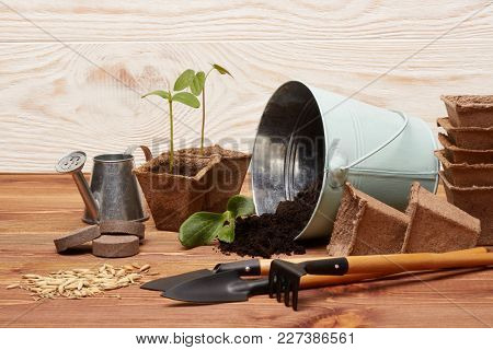 Gardening tools, bucket with soil, peat pots, seeds and young seedlings on a wooden background. Concept of spring gardening.