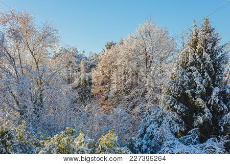 A White Winter Landscape / View Of Snow Covered Trees