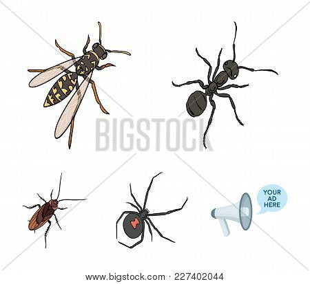 An Insect Arthropod, An Osa, A Spider, A Cockroach. Insects Set Collection Icons In Cartoon Style Ve