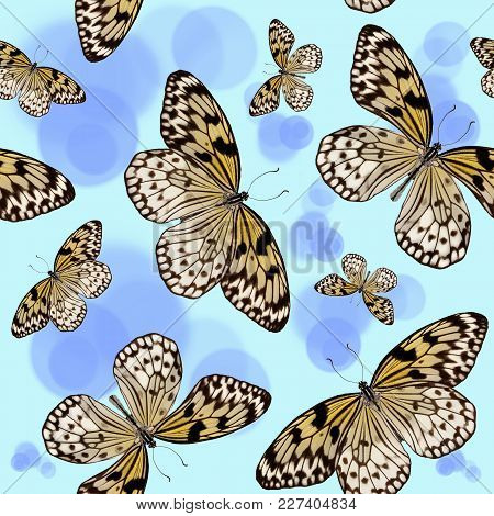 Seamless Pattern Of Tropical Butterflies Idea Leuconoe On Blue Background With Circles