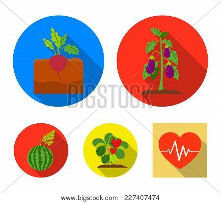 Radish, Strawberry, Watermelon, Eggplant.plant Set Collection Icons In Flat Style Vector Symbol Stoc