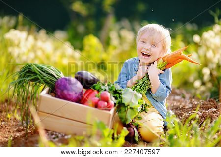 Cute Little Boy Holding A Bunch Of Fresh Organic Carrots In Domestic Garden. Healthy Family Lifestyl