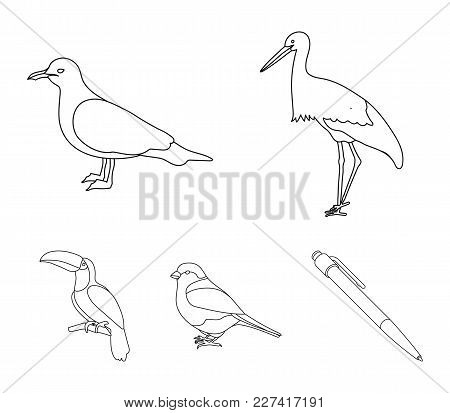 A Stork, A Seagull And Various Species. Birds Set Collection Icons In Outline Style Vector Symbol St