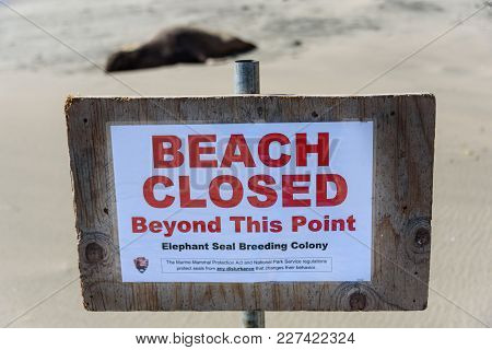 Sign On The Beach With An Elephant Seal In The Background.