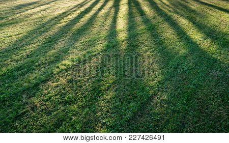 Tree shadow on short green grass