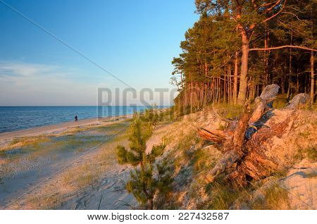 A Wild Beach In The Rays Of The Passing Sun. Baltic Sea Coast. Latvia.