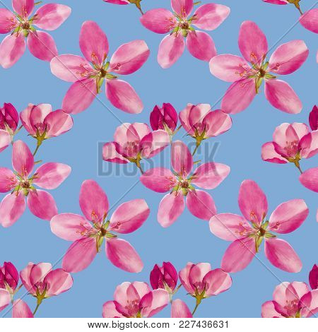 Petunia. Texture Of Flowers. Seamless Pattern For Continuous Replicate. Floral Background, Photo Col