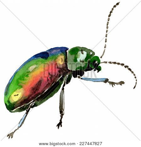 Exotic Beetles Wild Insect In A Watercolor Style Isolated. Full Name Of The Insect: Exotic Beetles.