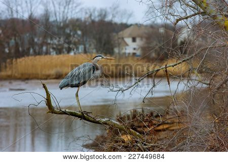 A Grey Heron Sitting On The Branch Of A Tree. Heron Is Sitting On A Tree