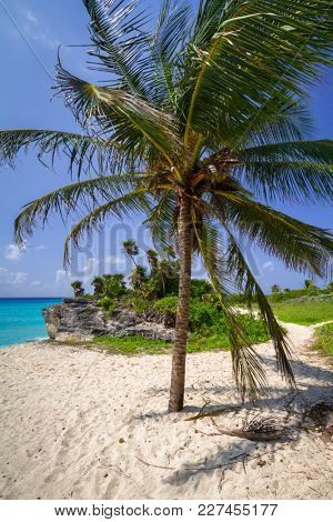 Palm tree at the beach of Caribbean sea in Mexico