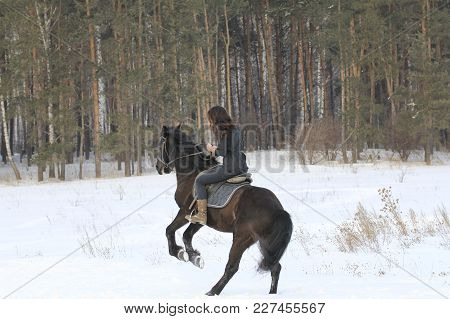 Young Woman Riding On Black Horse In Snowy Countryside, Telephoto Shot