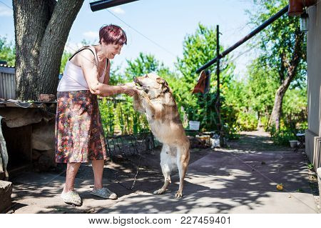 An Elderly Woman In The Yard Of Her House With A Dog. Grandma Is Playing With A Dog In The Street In