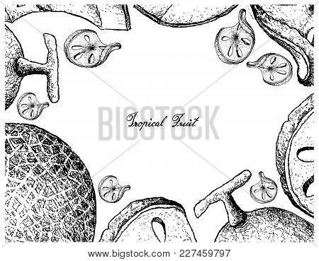 Fruit, Illustration Frame Of Hand Drawn Sketch Of Bael And Melon Isolated On White Background.