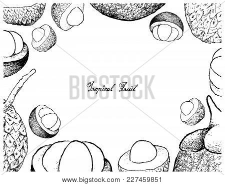 Fresh Fruits, Illustration Frame Of Hand Drawn Sketch Fresh Lychee And Mangosteen Fruits Isolated On