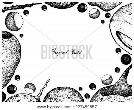 Fresh Fruits, Illustration Frame Of Hand Drawn Sketch Fresh Dimocarpus Longan And Coconut Fruits Iso