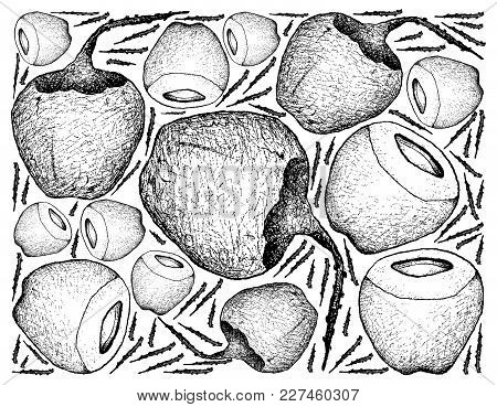 Tropical Fruits, Illustration Wall-paper Background Of Hand Drawn Sketch Coconut Or Ocos Nucifera Fr