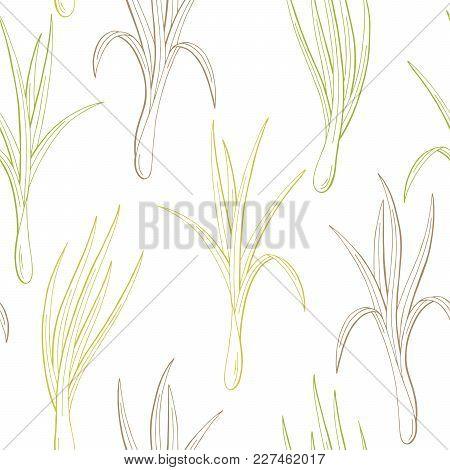 Lemongrass Plant Graphic Color Seamless Pattern Sketch Illustration Vector