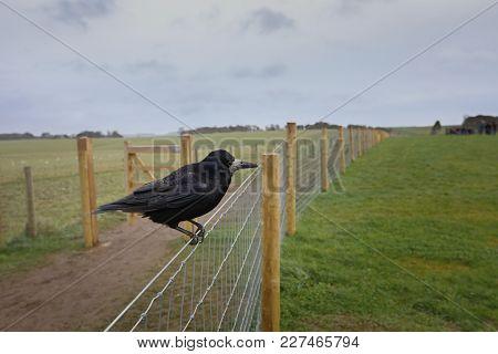 Guardian Crow Of Stonehenge, Wiltshire, United Kingdom
