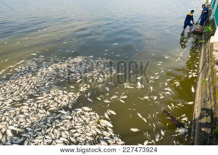 Hanoi, Vietnam - Oct 2, 2016: Mass Dead Fish On Lake With Garbage Collector, Environment Workers Tak