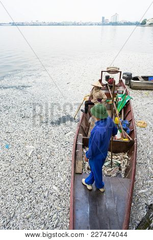 Hanoi, Vietnam - Oct 2, 2016: Garbage Collector, Environment Workers Take Mass Dead Fishes Out From