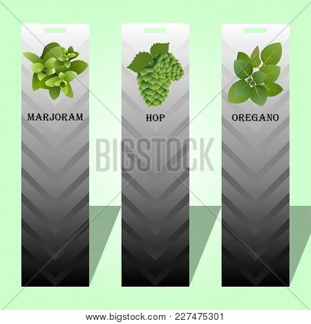 Long Label With Spicy Herbs Oregano Hop