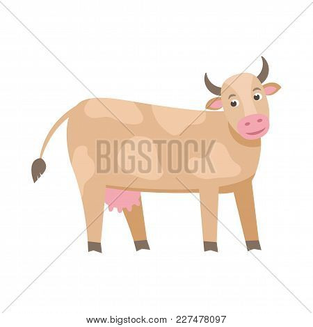 Cute Milk Cow Vector Flat Illustration Isolated On White Background. Farm Animal Cow Cartoon Charact