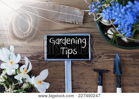 Sign With English Text Gardening Tips. Sunny Spring Flowers Like Grape Hyacinth And Crocus. Gardenin