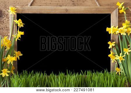 Blackboard With Copy Space For Advertisement. Spring Flowers Nacissus Or Daffodil With Grass. Rustic