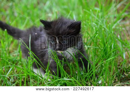 Zoom On A Kitten In The Garden