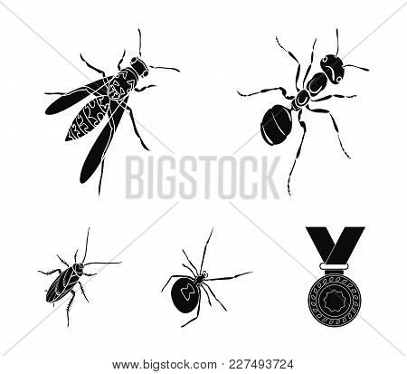 An Insect Arthropod, An Osa, A Spider, A Cockroach. Insects Set Collection Icons In Black Style Vect
