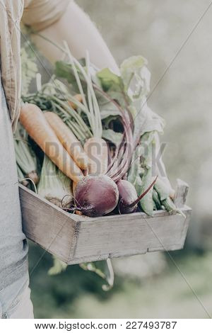 Crop Shot Of Person Holding Wooden Box With Fresh And Ripe Gathered Vegetables In Garden.