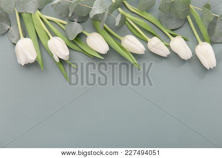 From Above Shot Of Delicate White Tulips With Gentle Green Stems Composed In Row On Gray.