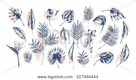 Bundle Of Tropical Leaves Of Various Plants Hand Drawn With Contour Lines Against Pink Paint Traces
