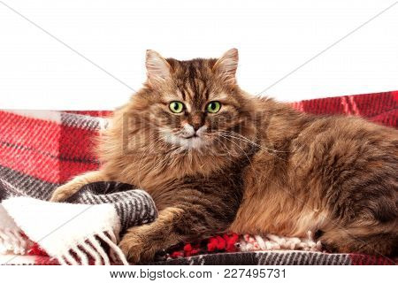 Wool Blanket And A Cat Isolated On White Background.