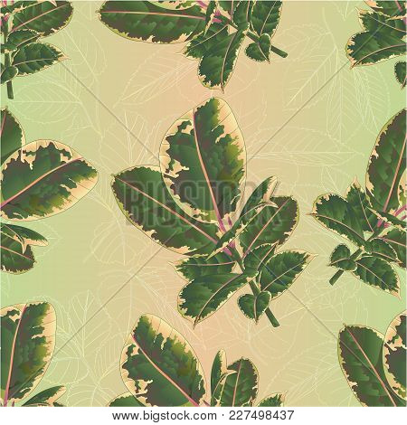 Seamless Texture Ficus Elastica Ruby Branch And Colorful Leaves Isolated On A White Background Color