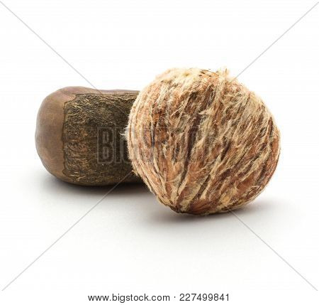 Peeled European Chestnut Compare With One Spanish Edible In A Husk Isolated On White Background Raw