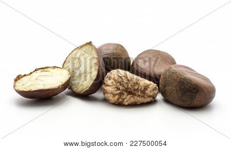 European Chestnut Set Spanish Edible Isolated On White Background Raw Fresh Brown Nuts With Creamy F